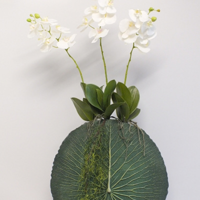 Three Phalaenopsis in a Lotus Leaf Vase 2154