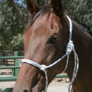 Tie Up Rope Halter