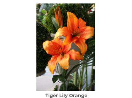Tiger Lily Orange 65cm