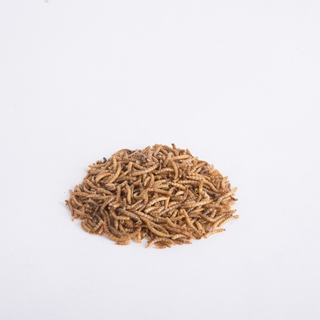 Topflite Dried Meal Worms