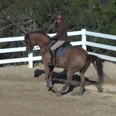 Transitions with the Dressage Horse