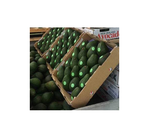 Tray of high quality avocados for sale from J3 Fresh Store