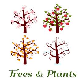 Trees & Plants