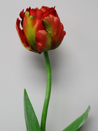 Tulip red and green