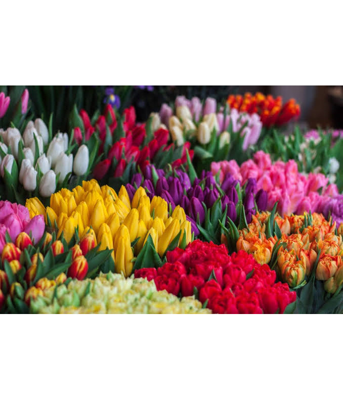 tulips in season at royal oak flowerise florist