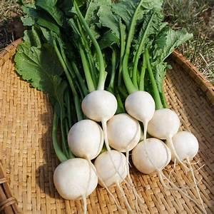 Turnips Bunch Organic
