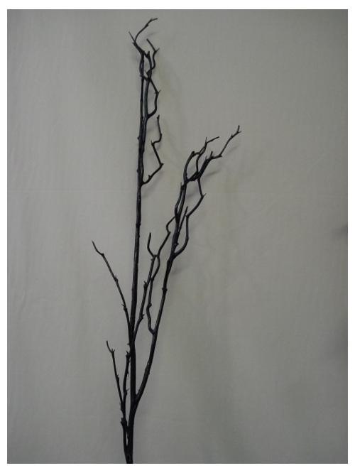 twig branch