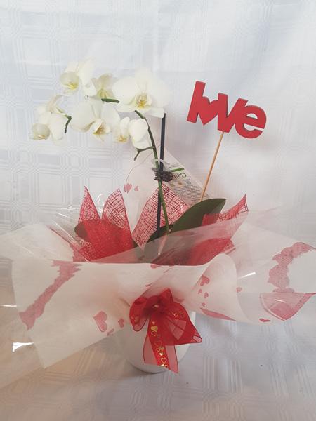 Valentines Mini Orchid