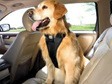 Vehicle Pet Harness