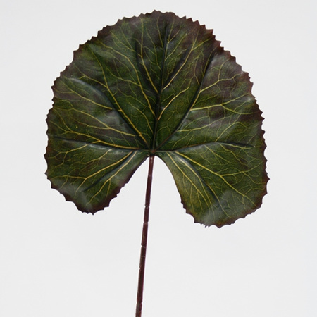 Viola Lily Leaf 4388