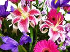 vox flower bouquet delivered to epsom, royal oak, greenlane, one tree hill