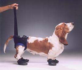 Walkabout Rear Harness