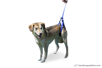 Walkin' Rear Support Leash