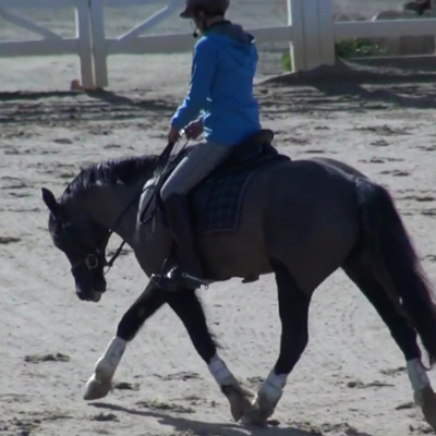 Warm Up for the Body Challenged Dressage Horse