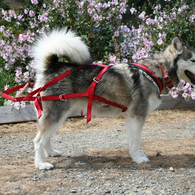 Weight Pull harness