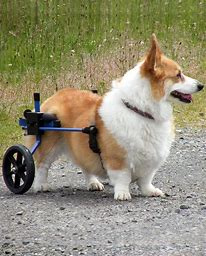 WHEELCHAIR FOR LILY