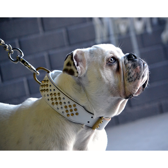 White leather dog collar for strong dogs with gold studs by Rogue Royalty