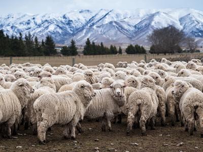 Why Buy Wool?