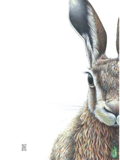 Wild Grey Fox - Bob the Hare Print by Nikki McIvor
