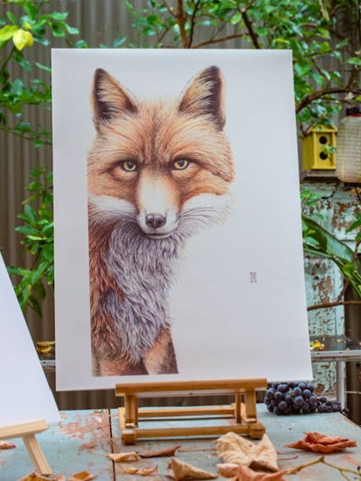 Wild Grey Fox - Grace Fox Print by Nikki McIvor
