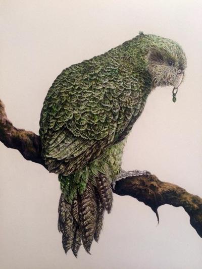 Wild Grey Fox - Kakapo Print Wild Honey Art