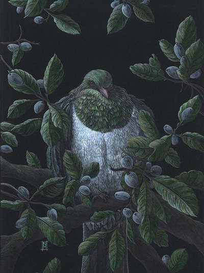 Wild Grey Fox - Kereru NZ Wood Pidgeon by Nikki McIvor