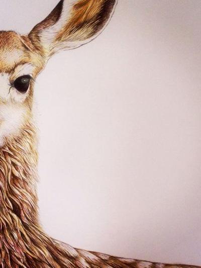 Wild Grey Fox - Willow the Deer Print by Nikki McIvor