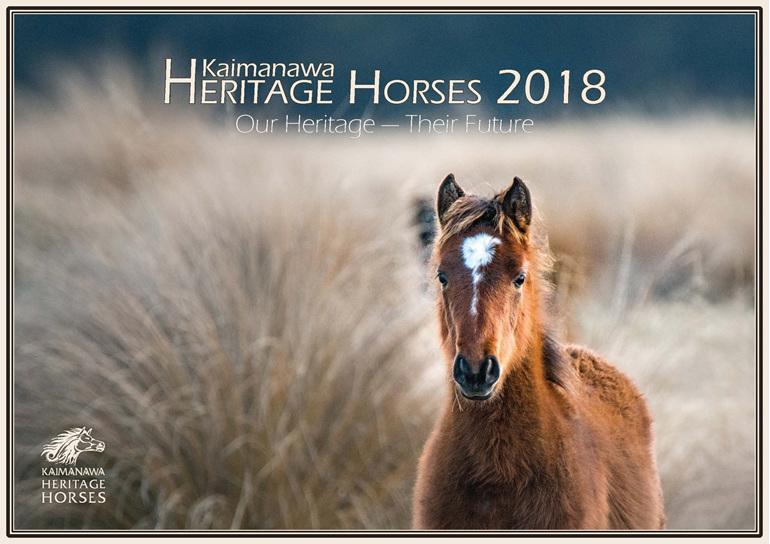 Wild Horse Kaimanawa Foal