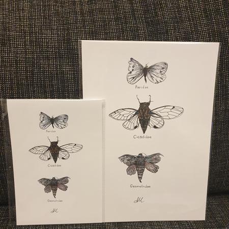 Wings - Prints