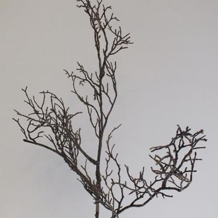 Winter twig 4417