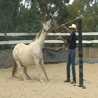 Worming the Difficult Horse