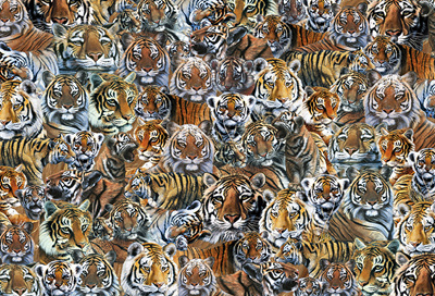 Otter House 500 Piece Jigsaw Puzzle: Impossibles - Tigers