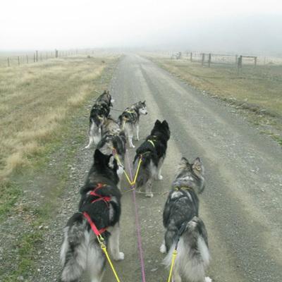 X-Back Sled Dog Harness